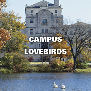 Campus Lovebirds